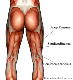 Muscles to Stimulate for Cellulite Reduction
